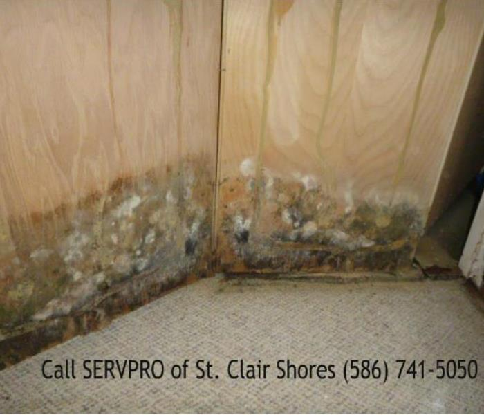 Sump Pump Failure - Clinton Township, MI