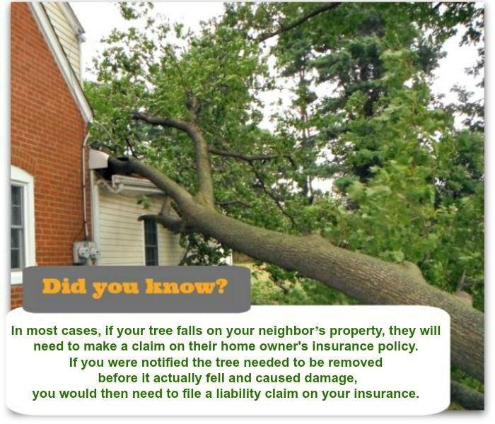 Storm Damage Severe Weather Facts